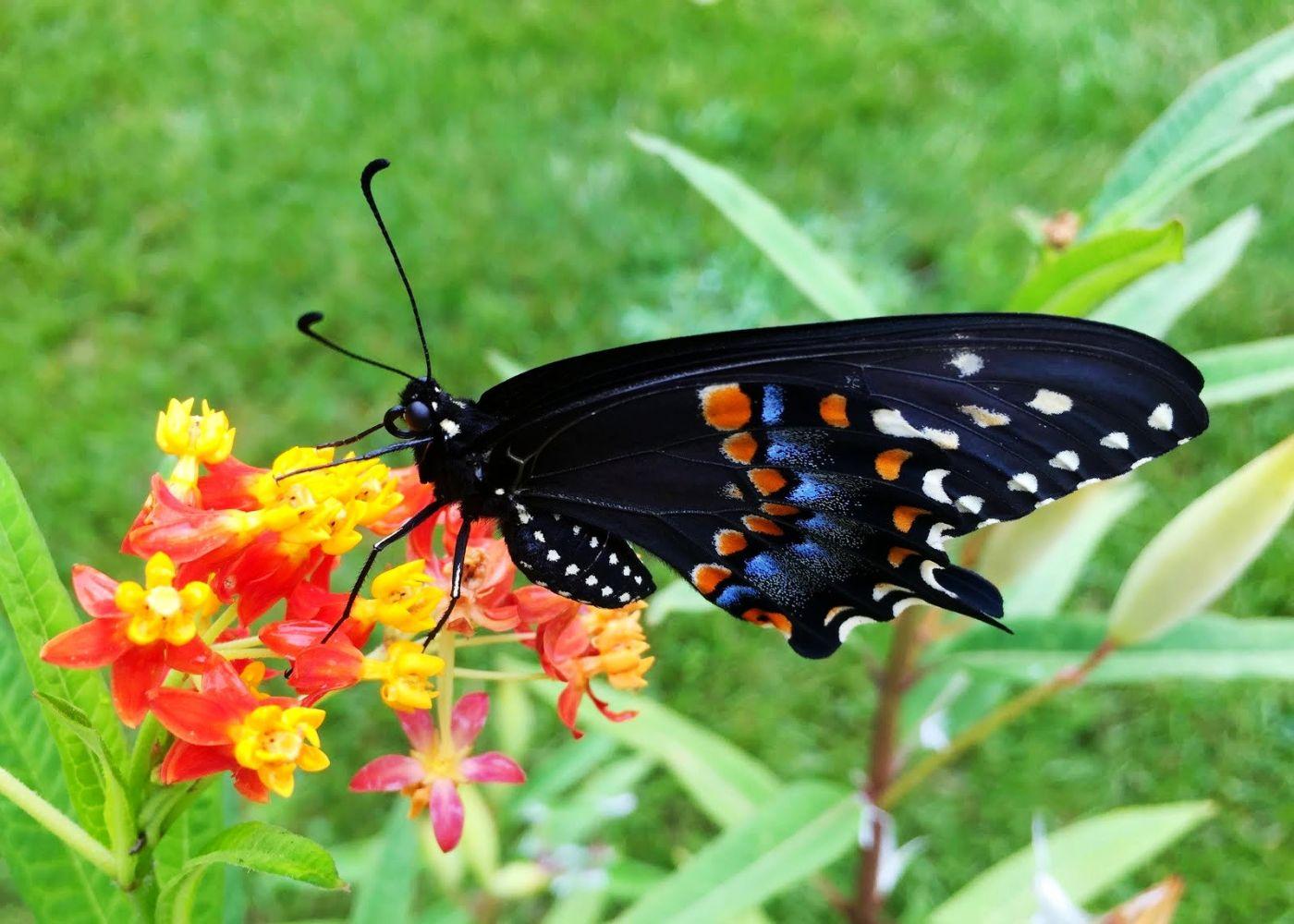 赫尔希花园看蝴蝶_图1-20