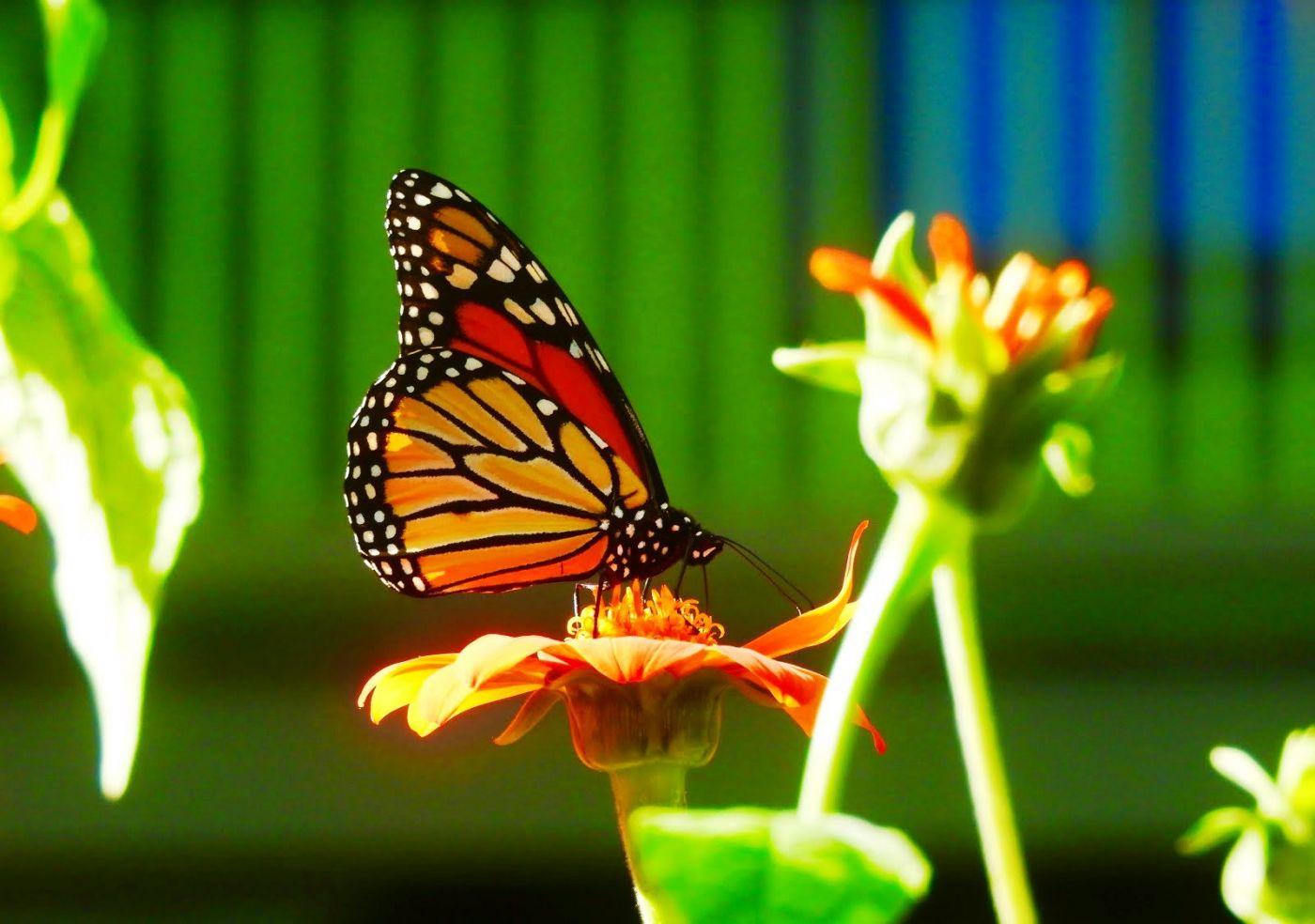 赫尔希花园看蝴蝶_图1-23