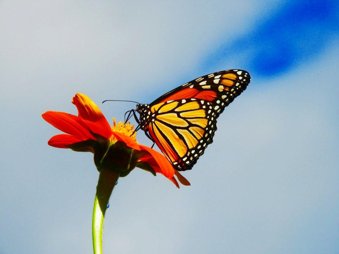 赫尔希花园看蝴蝶_图1-24