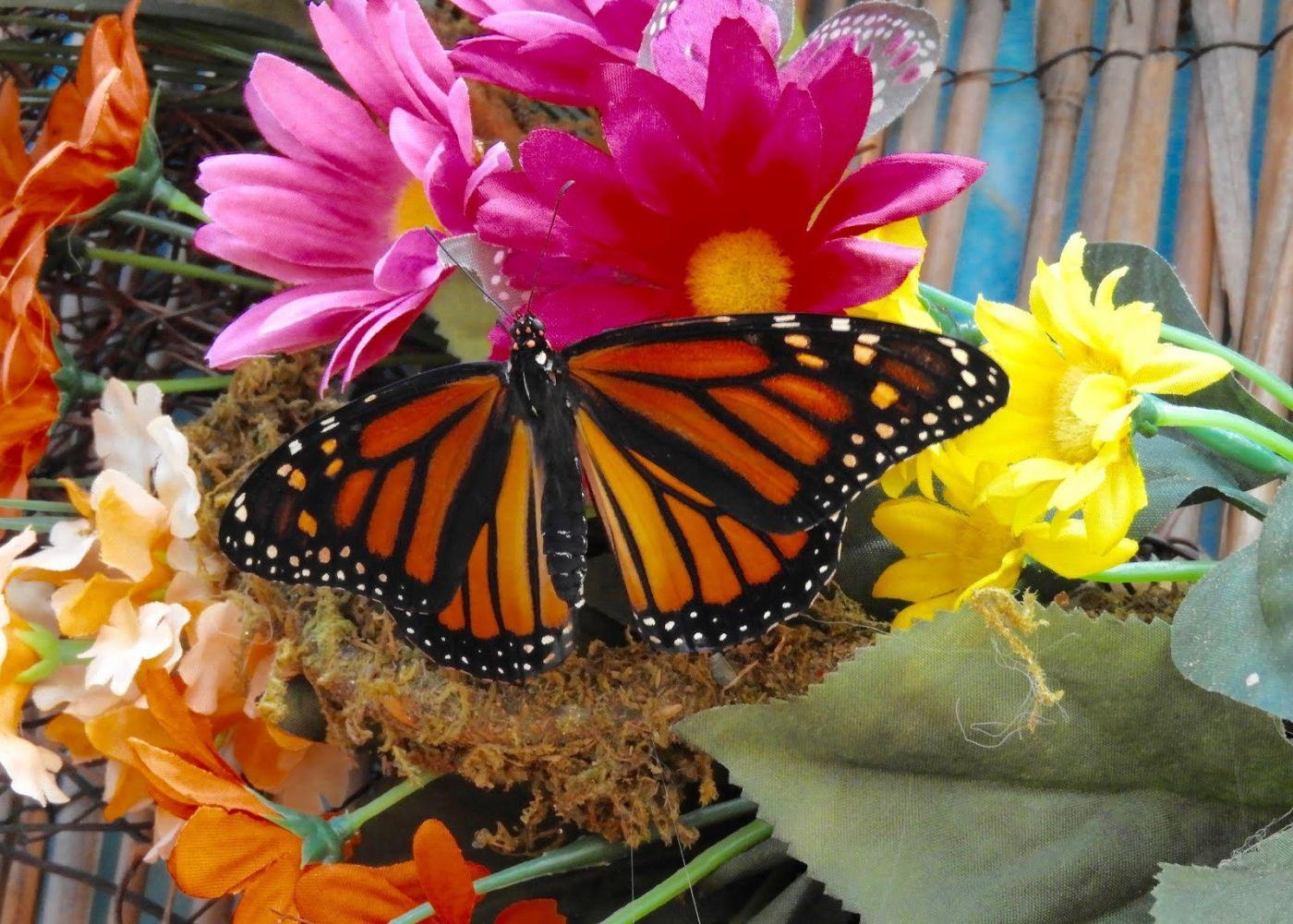 赫尔希花园看蝴蝶_图1-28