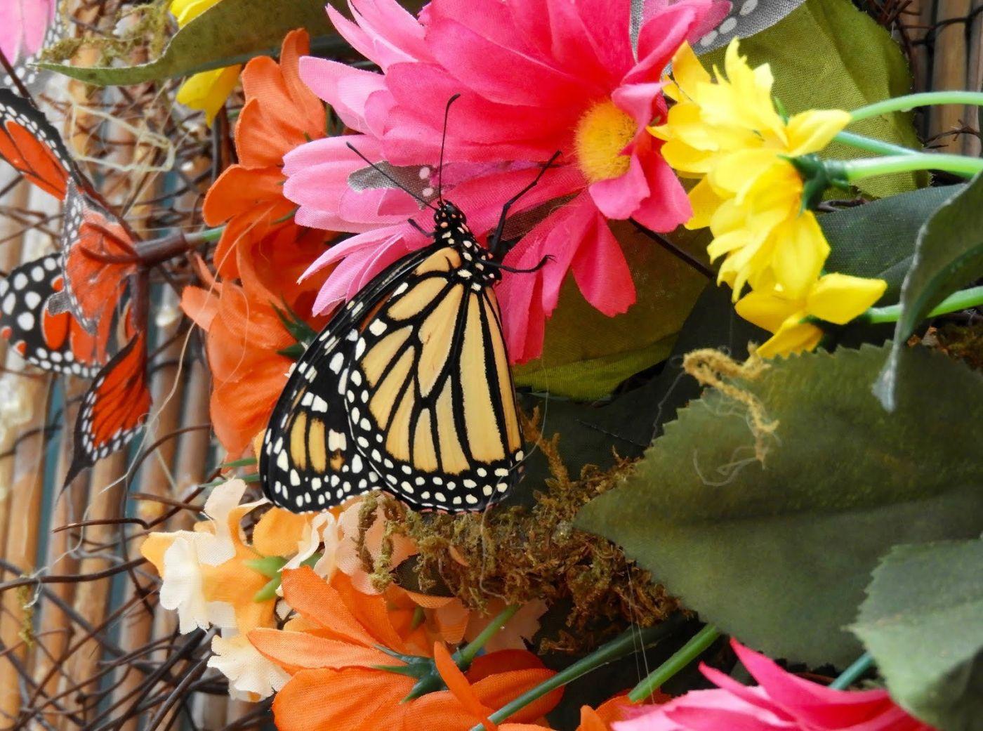 赫尔希花园看蝴蝶_图1-29