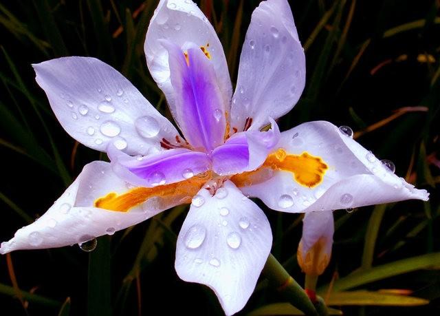 植物园兰花仍在开_图1-1