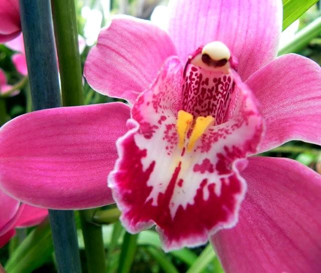 植物园兰花仍在开_图1-7