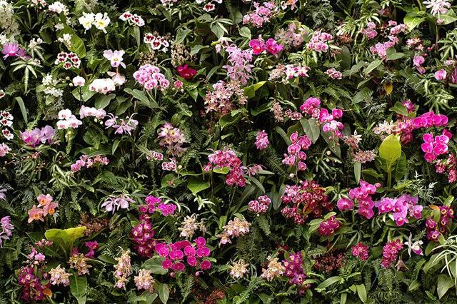 植物园兰花仍在开_图1-14