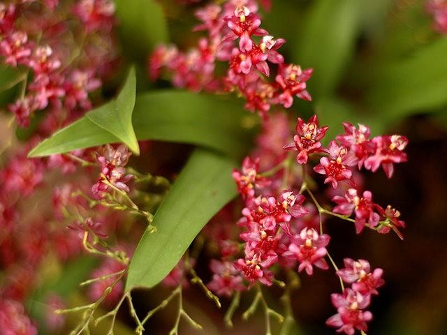 植物园兰花仍在开_图1-15