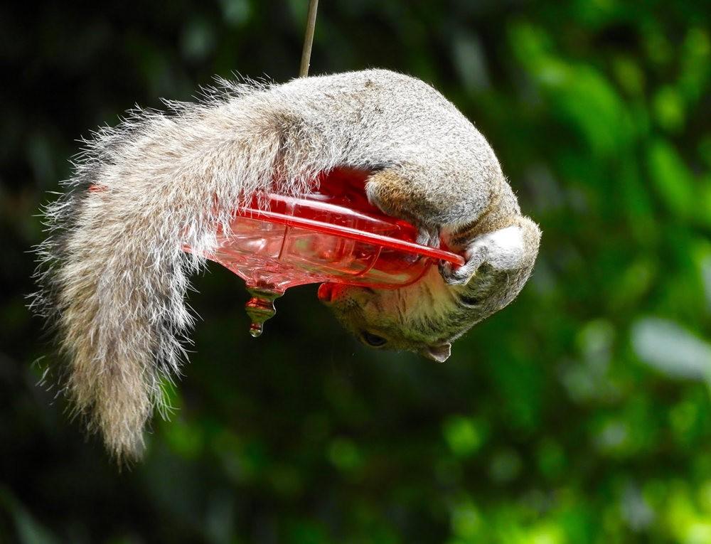 偷食松鼠_图1-1