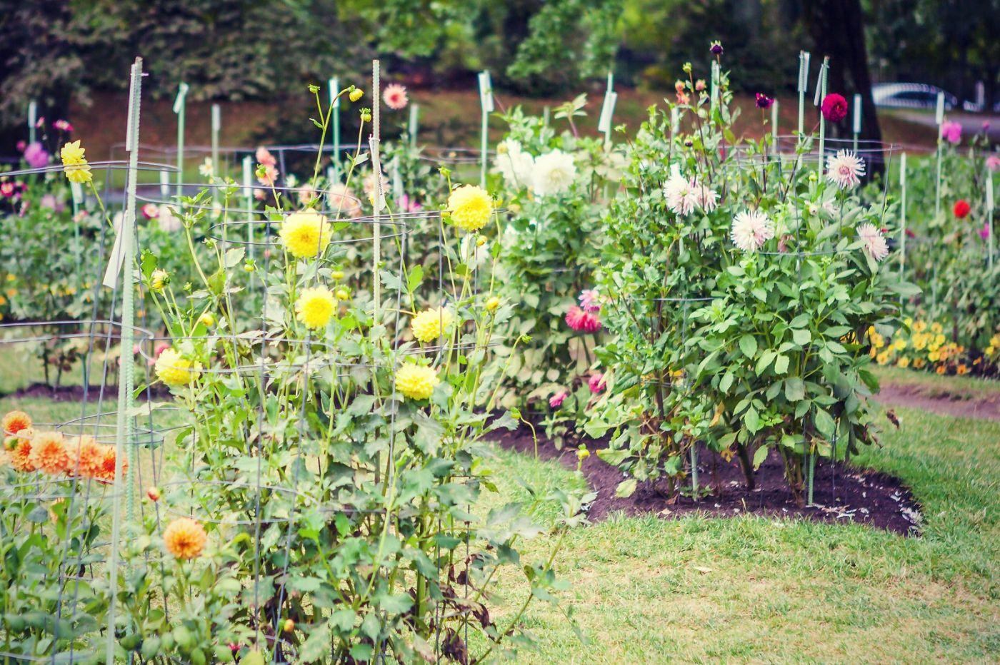 加拿大哈利法克斯(Halifax)公共花园,漂亮的花亭_图1-27
