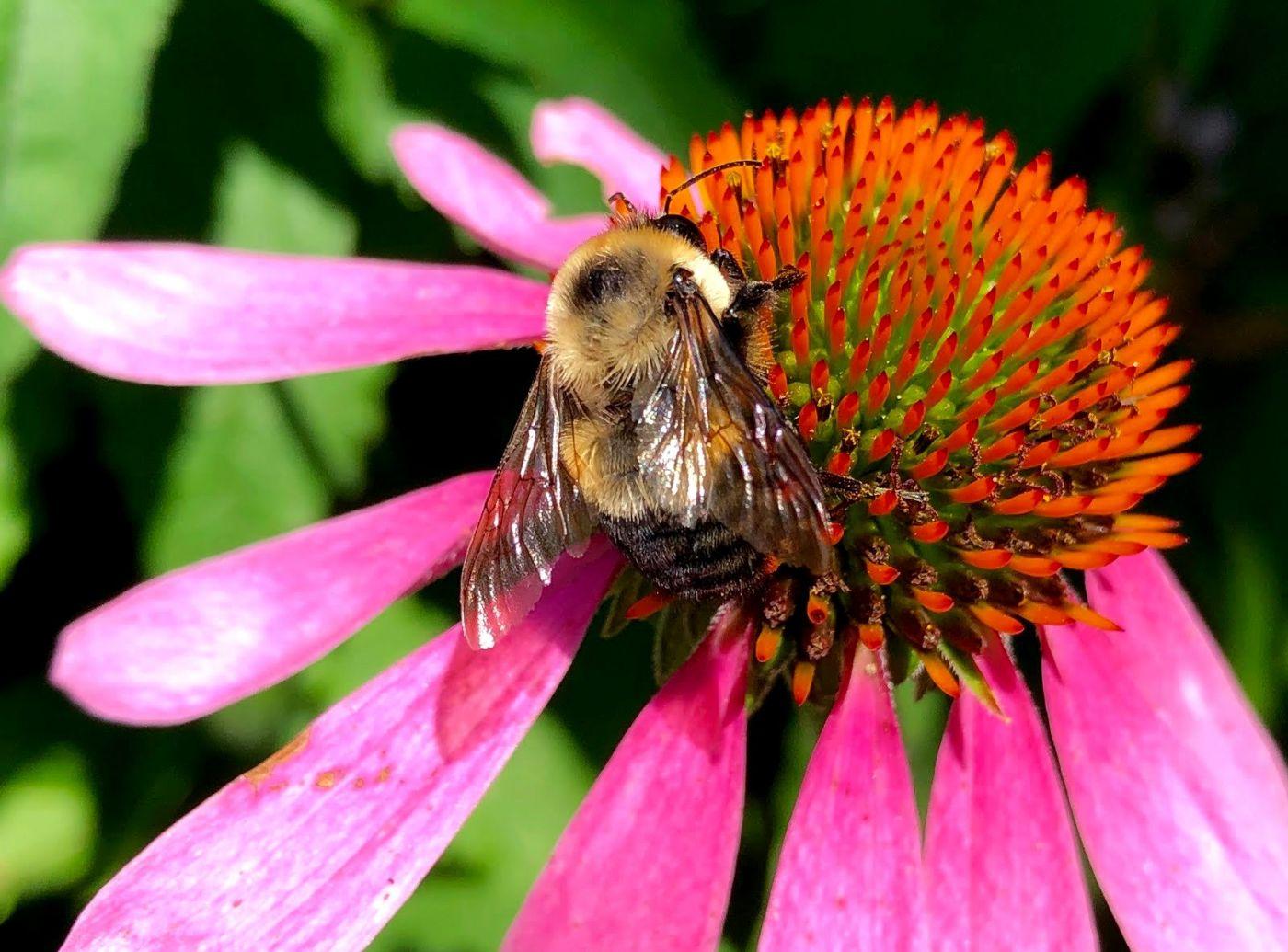 7月的蜜蜂.蝴蝶_图1-1
