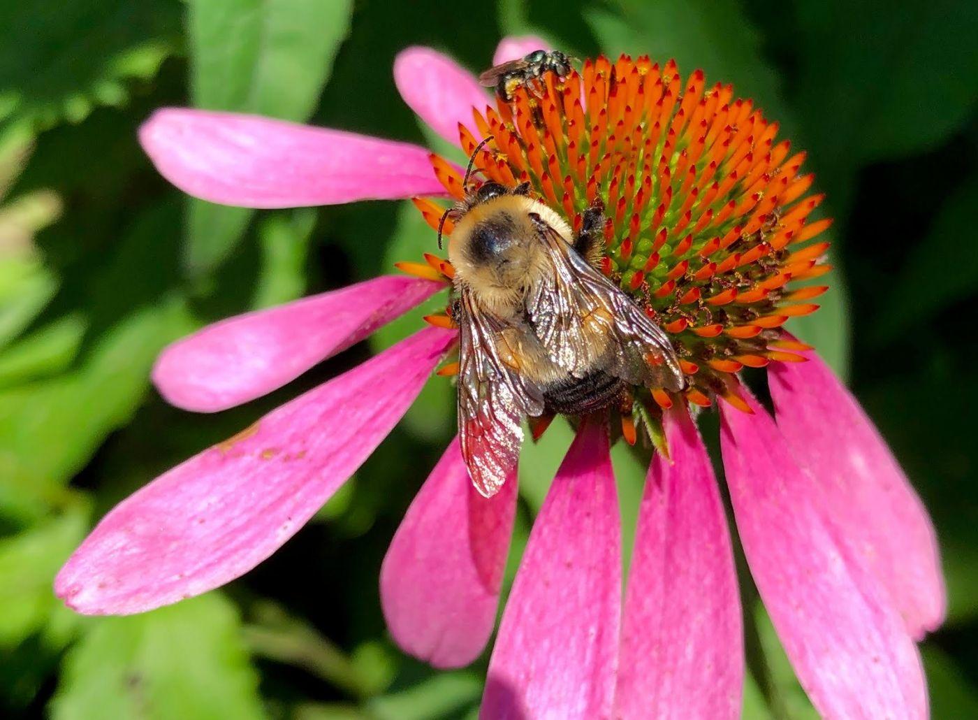 7月的蜜蜂.蝴蝶_图1-2