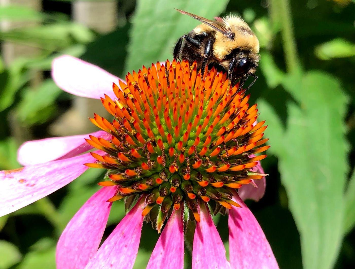 7月的蜜蜂.蝴蝶_图1-3