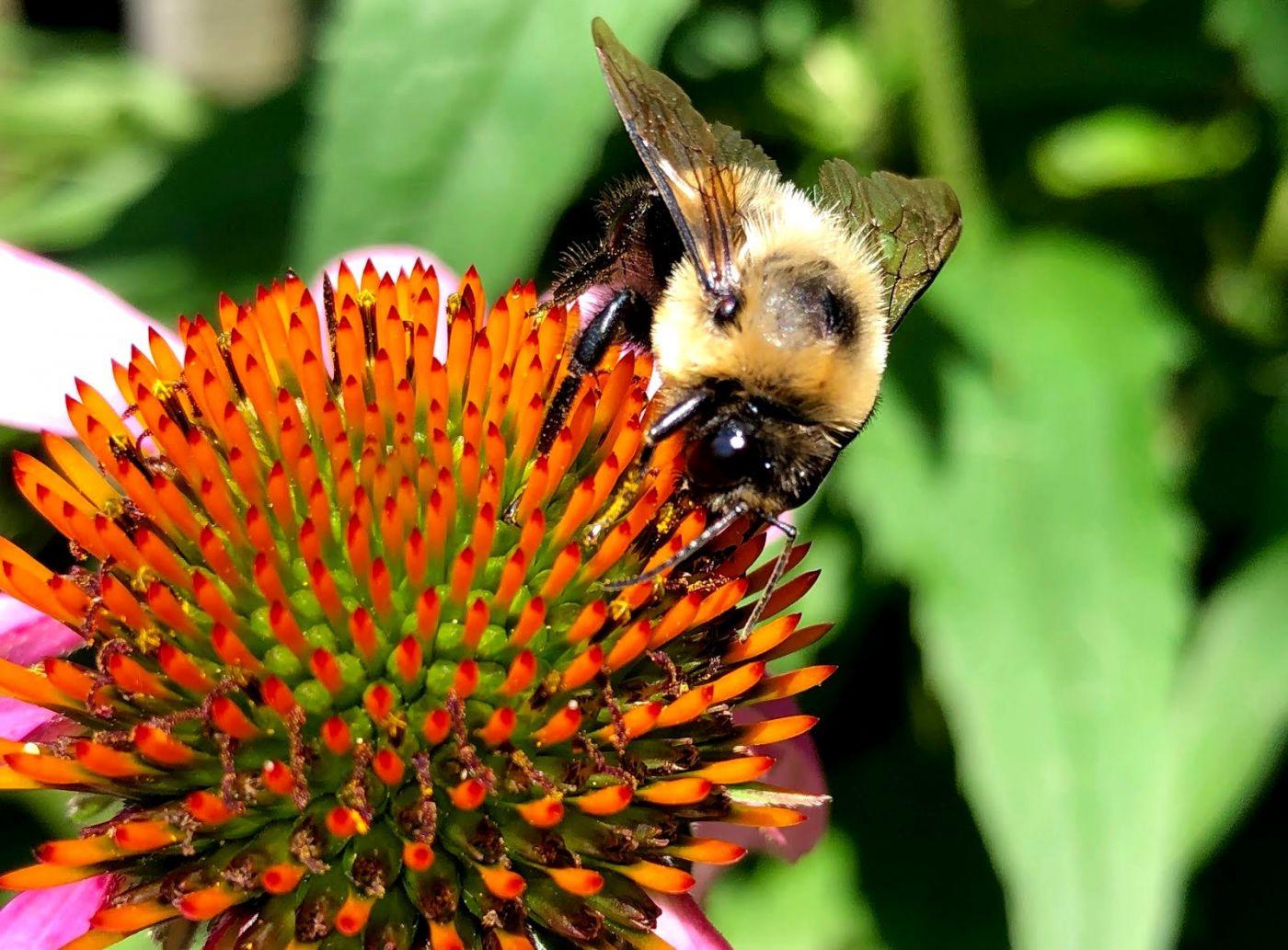 7月的蜜蜂.蝴蝶_图1-4