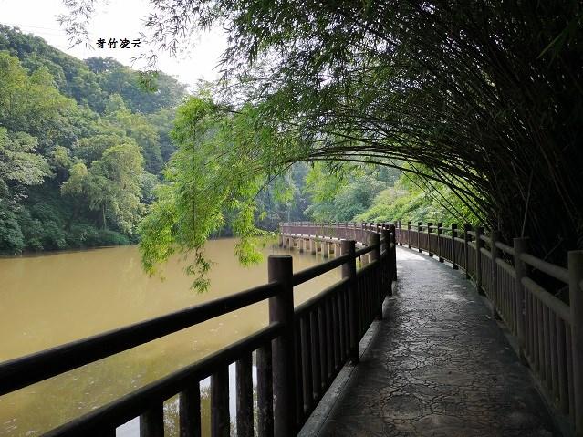 【青竹凌云】桥弦绿琴  鸟歌水馨(原创摄影)_图1-7