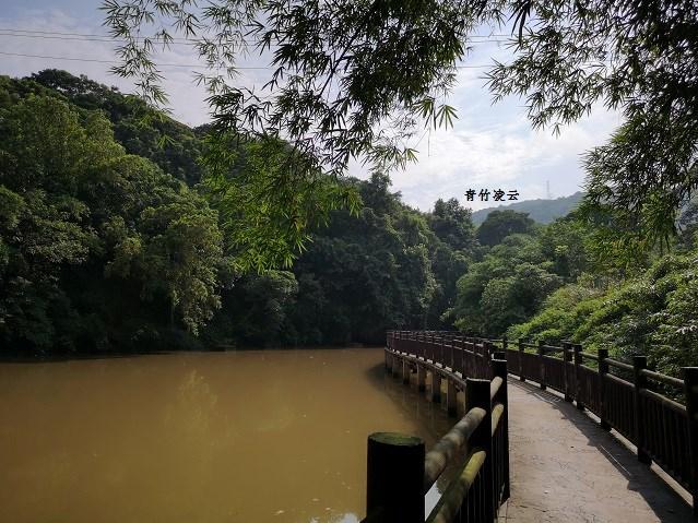 【青竹凌云】桥弦绿琴  鸟歌水馨(原创摄影)_图1-9