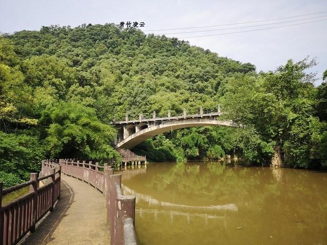 【青竹凌云】桥弦绿琴  鸟歌水馨(原创摄影)_图1-1
