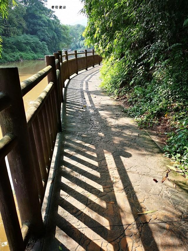 【青竹凌云】桥弦绿琴  鸟歌水馨(原创摄影)_图1-4