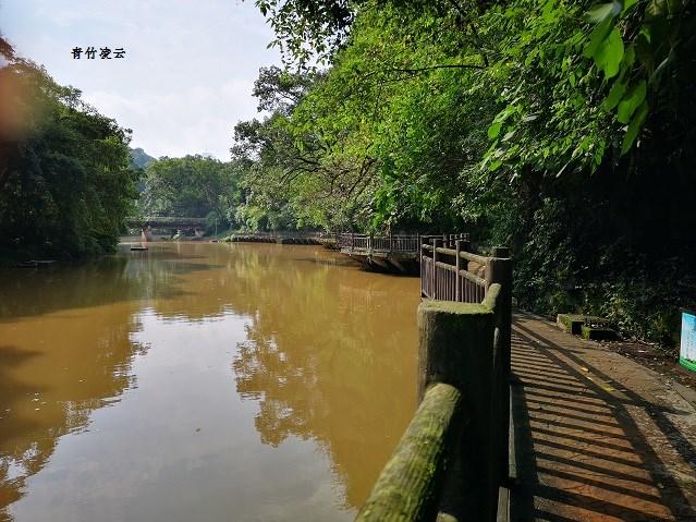 【青竹凌云】桥弦绿琴  鸟歌水馨(原创摄影)_图1-3
