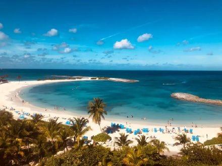 高娓娓:美国人度假喜欢以猪为伍?奇趣巴哈马,全球唯一被猪占领的岛,禁止人类居住 ..._图1-2