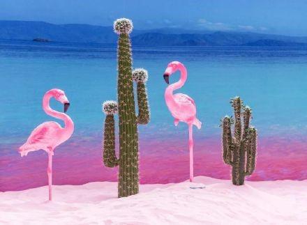 高娓娓:美国人度假喜欢以猪为伍?奇趣巴哈马,全球唯一被猪占领的岛,禁止人类居住 ..._图1-5