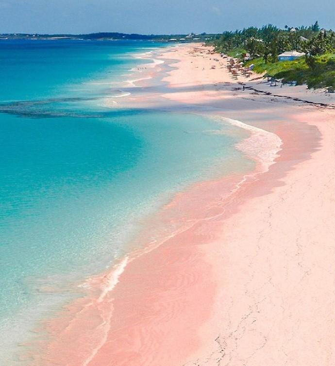高娓娓:美国人度假喜欢以猪为伍?奇趣巴哈马,全球唯一被猪占领的岛,禁止人类居住 ..._图1-12