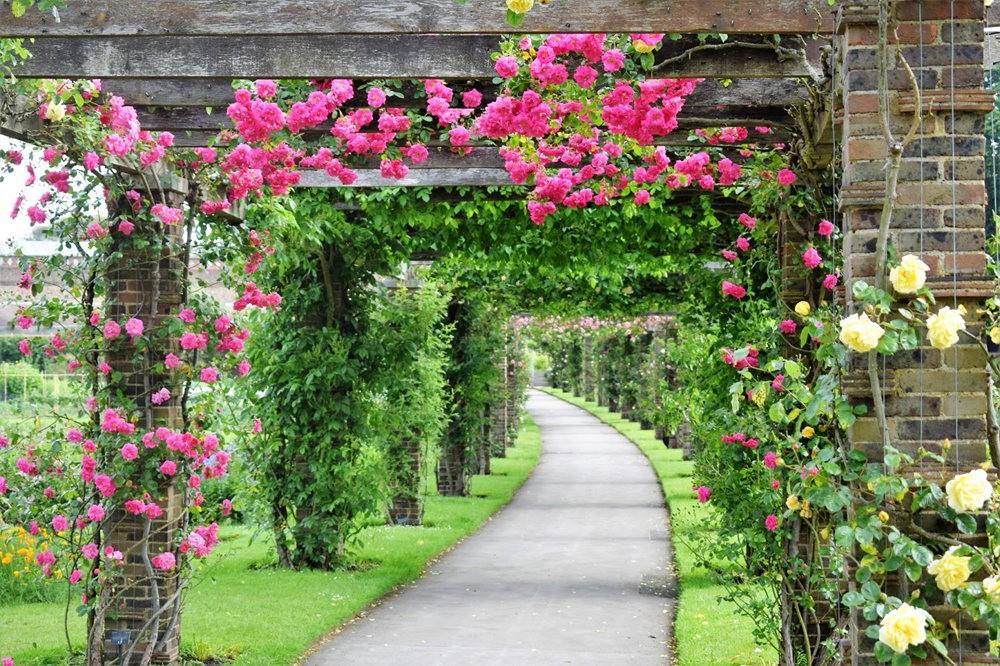 玫瑰是花中皇后_图1-5