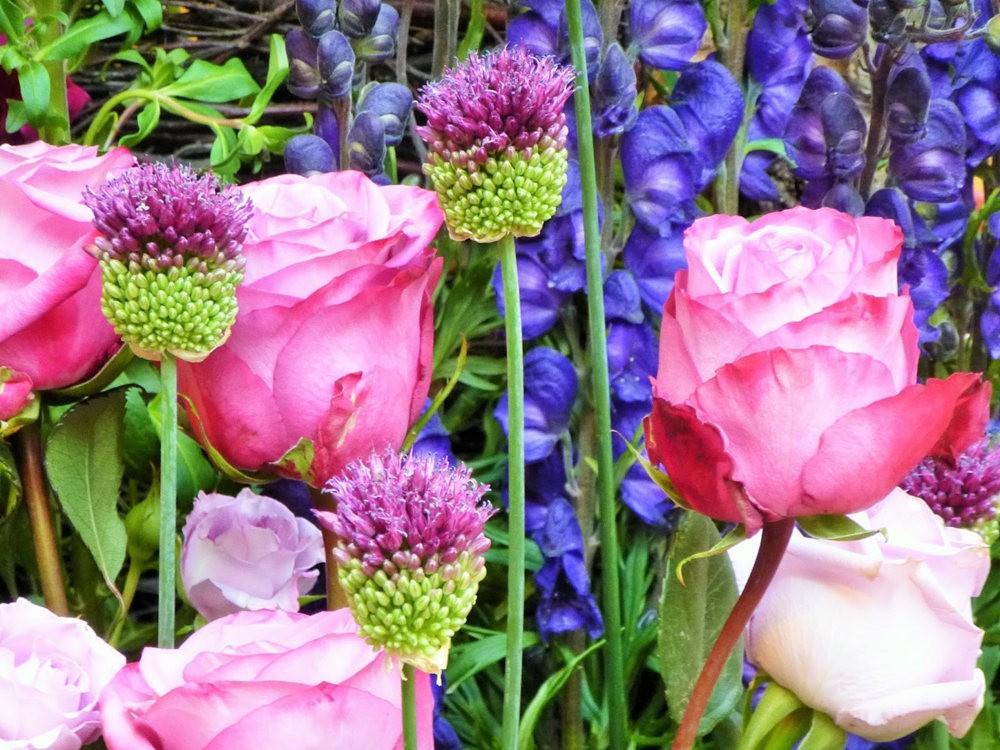 玫瑰是花中皇后_图1-24