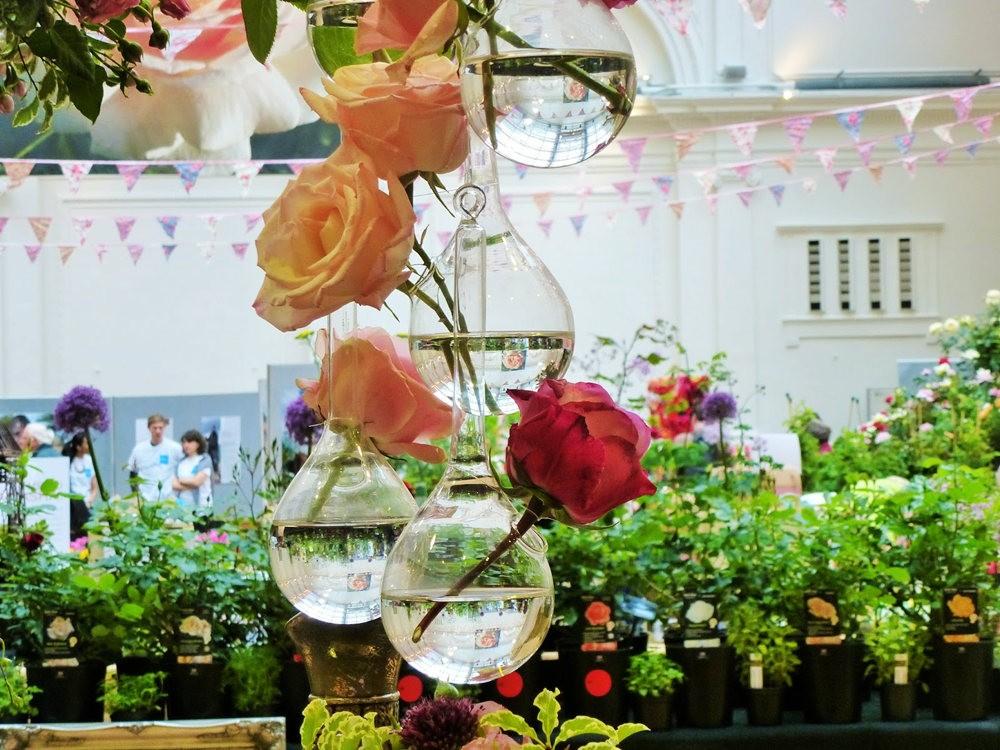 玫瑰是花中皇后_图1-25