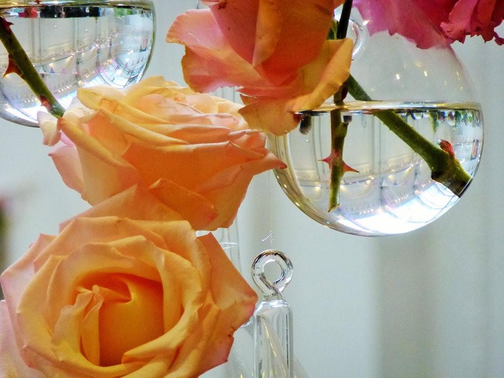 玫瑰是花中皇后_图1-26