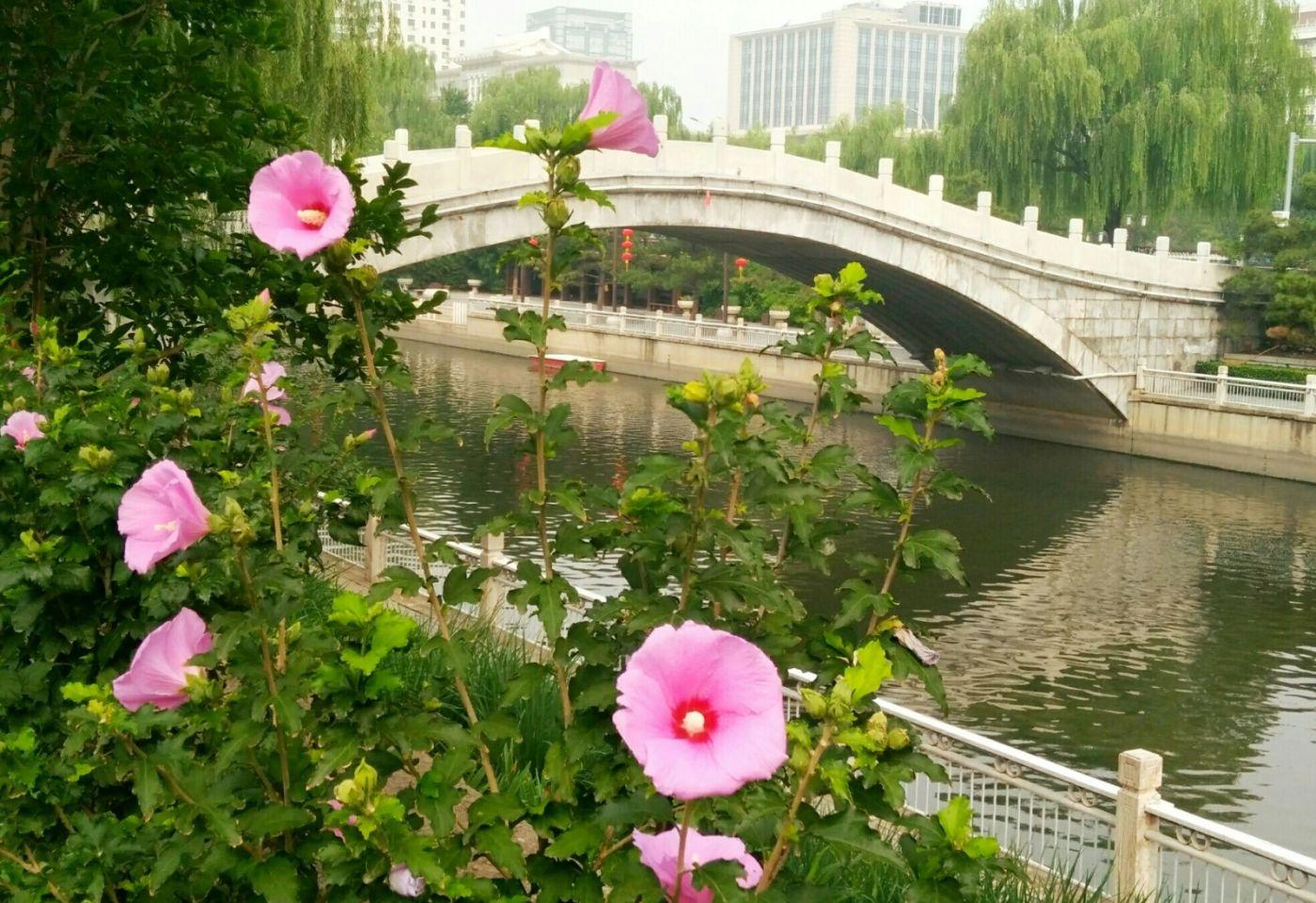 北京长夏的花朵——言日_图1-1