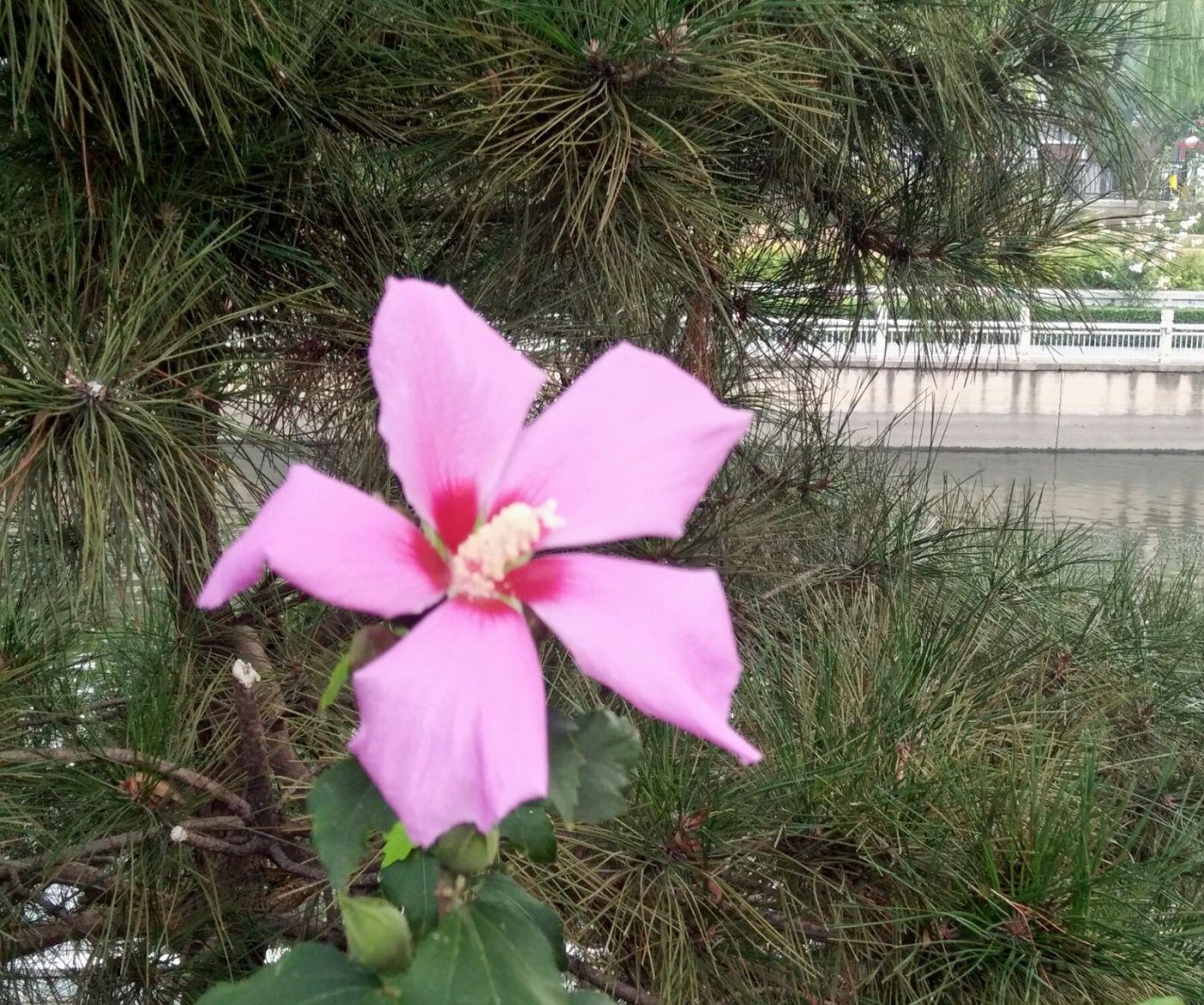 北京长夏的花朵——言日_图1-2