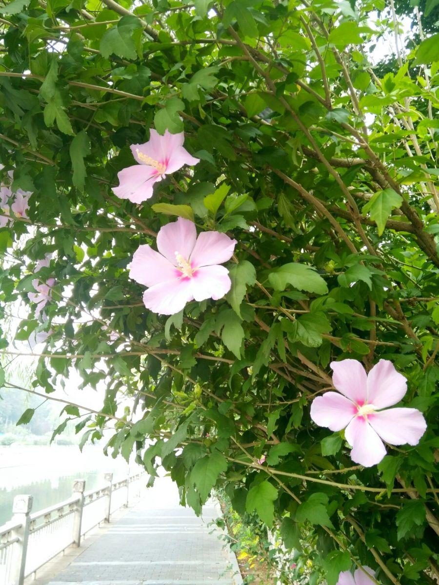 北京长夏的花朵——言日_图1-3