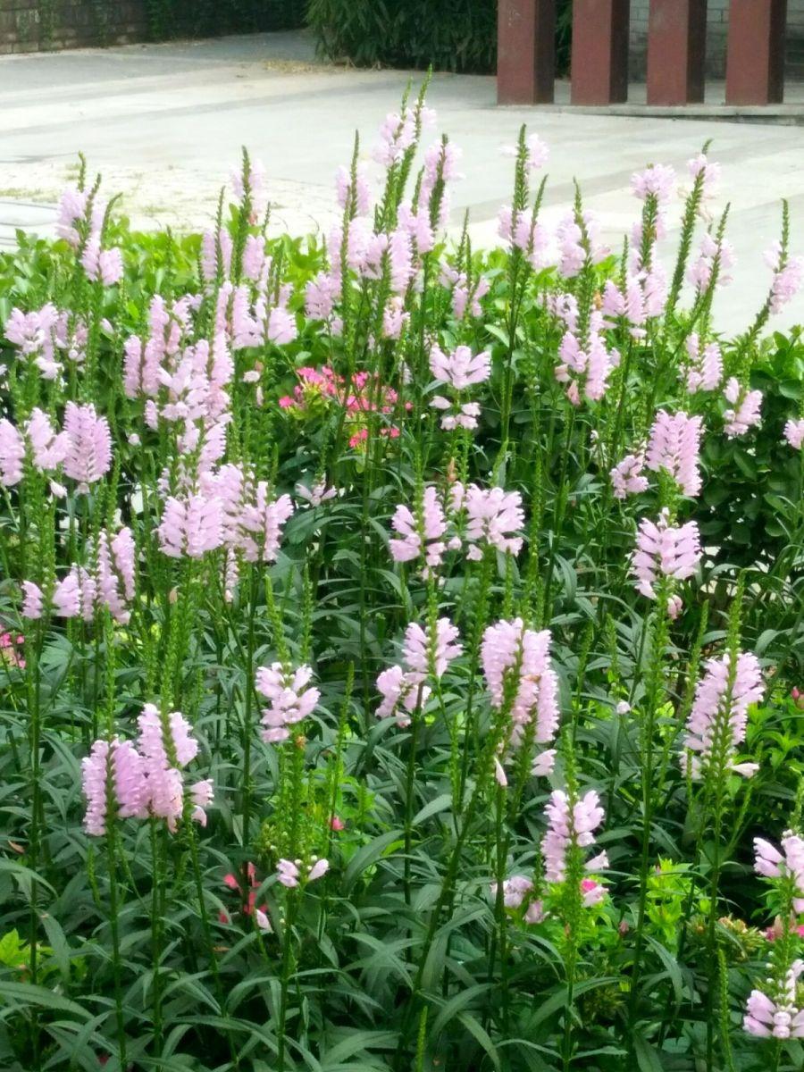 北京长夏的花朵——言日_图1-5