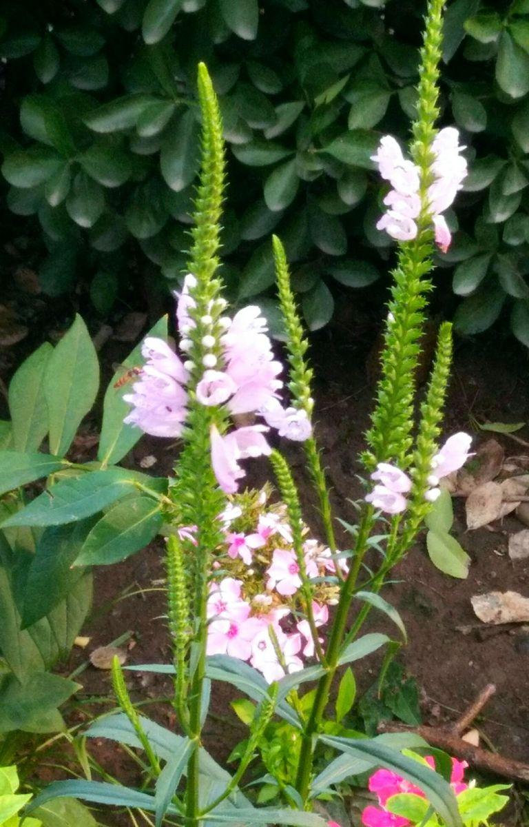 北京长夏的花朵——言日_图1-6