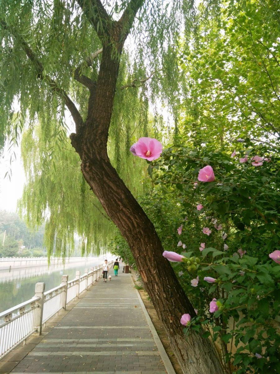 北京长夏的花朵——言日_图1-7