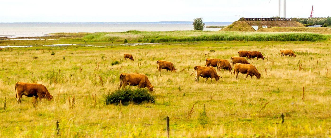 北欧旅途,动物世界_图1-37
