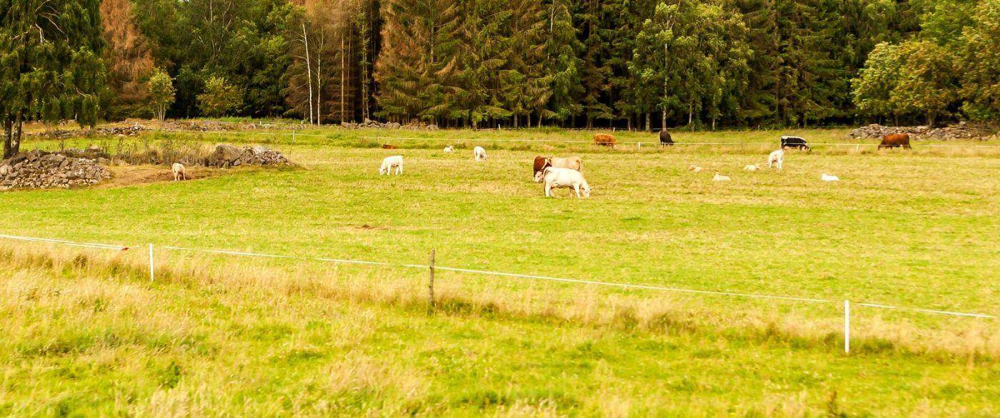 北欧旅途,动物世界_图1-25