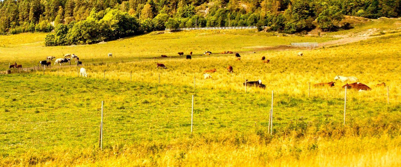北欧旅途,动物世界_图1-22