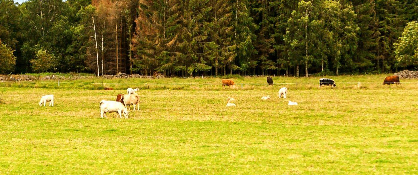北欧旅途,动物世界_图1-15