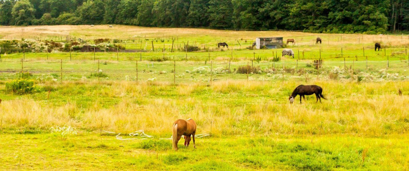 北欧旅途,动物世界_图1-16