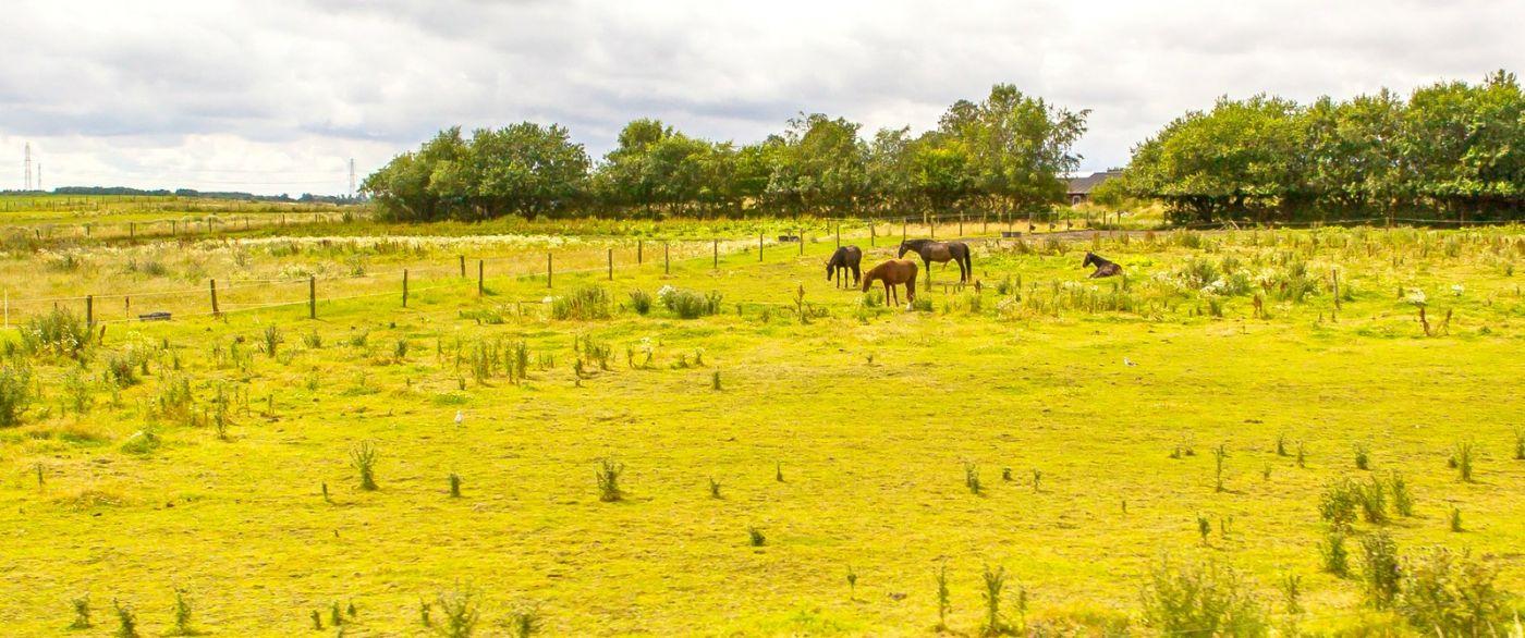 北欧旅途,动物世界_图1-11
