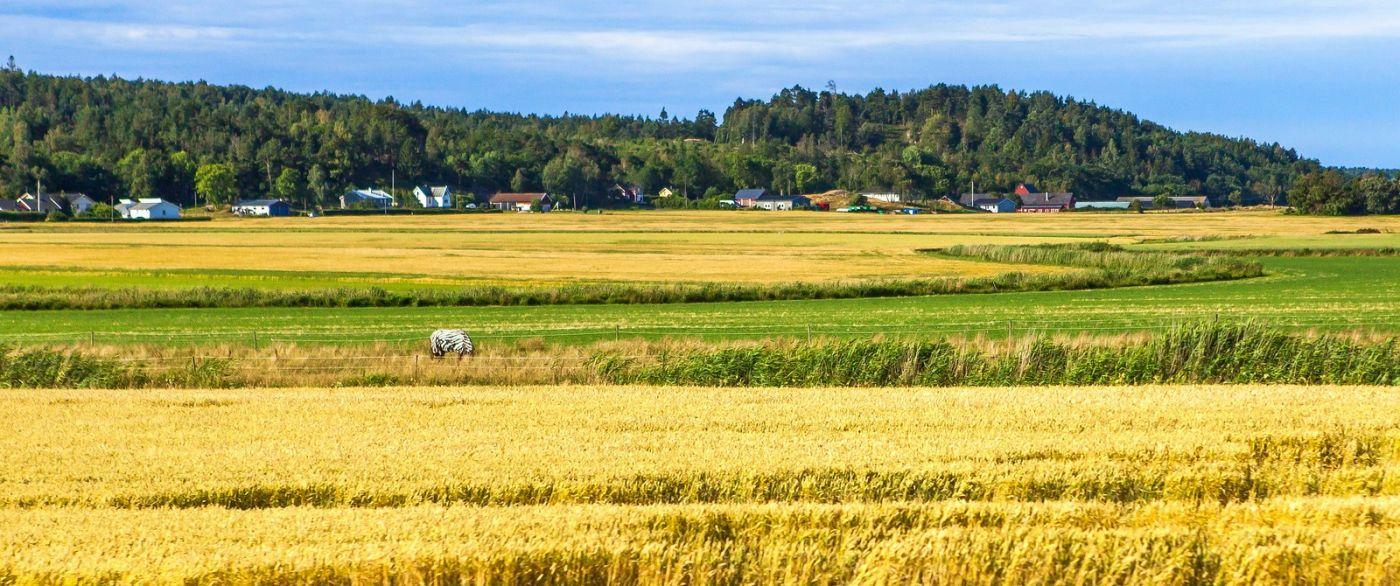 北欧旅途,动物世界_图1-4
