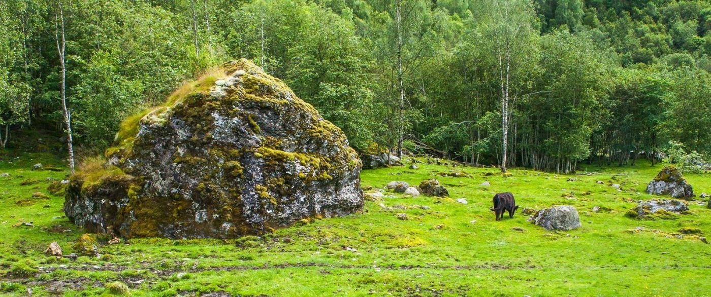 北欧旅途,动物世界_图1-2