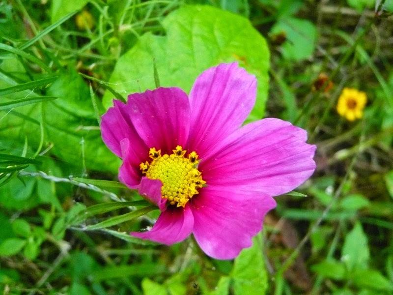 无处不在的鲜花---2_图1-4