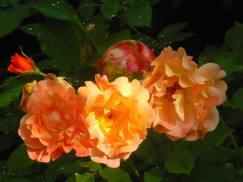 无处不在的鲜花---2_图1-5