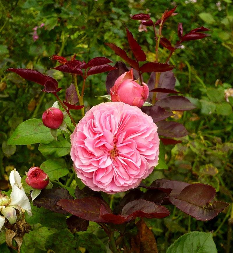 无处不在的鲜花---2_图1-6