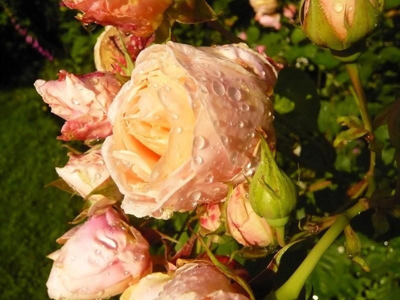 无处不在的鲜花---2_图1-8