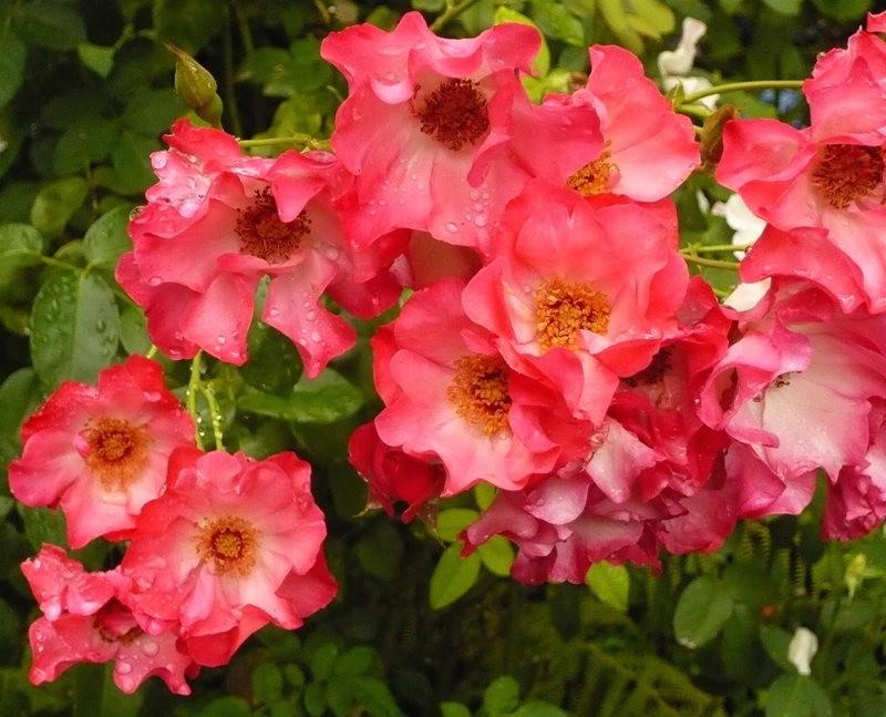 无处不在的鲜花---2_图1-9