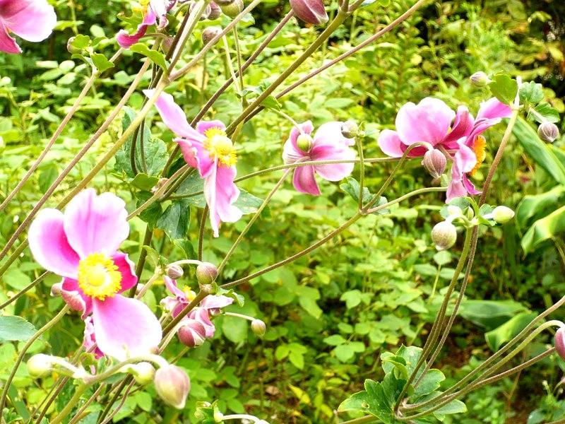 无处不在的鲜花---2_图1-10