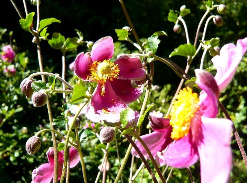 无处不在的鲜花---2_图1-11