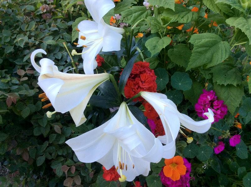 无处不在的鲜花---2_图1-12