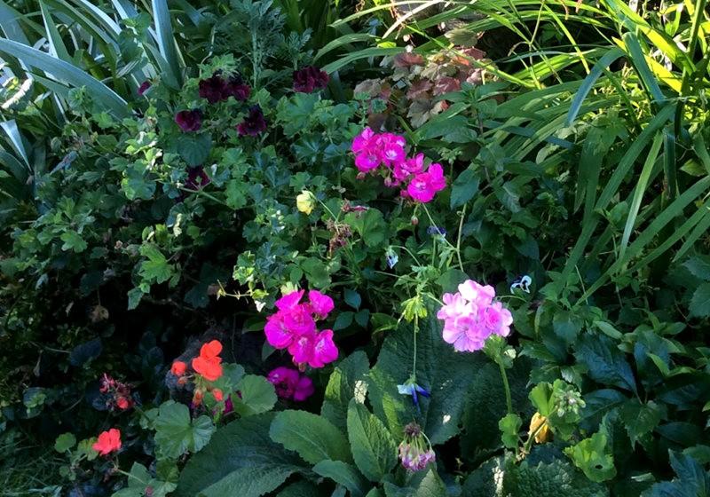 无处不在的鲜花---2_图1-13